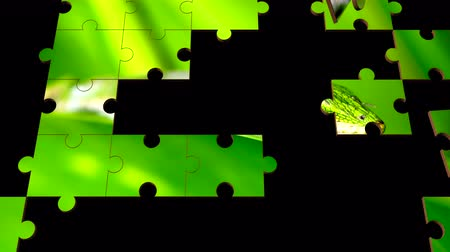 проливая : Multiple jigsaw puzzle pieces forming randomly show a vibrant green Gecko lizard poised on a tropical plant. Стоковые видеозаписи