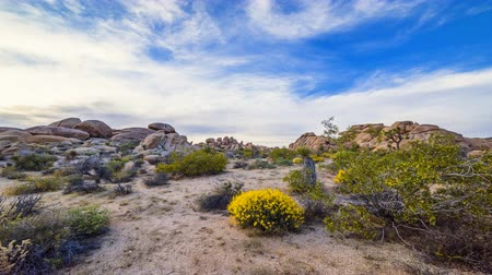 крайняя местности : A classic desert landscape in Joshua Tree National Park shows the famous trees from which the desert was named.