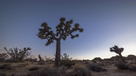 pozisyon : Day to night timelapse in Joshua Tree shows the formation and movement of the Milky Way as day becomes night.