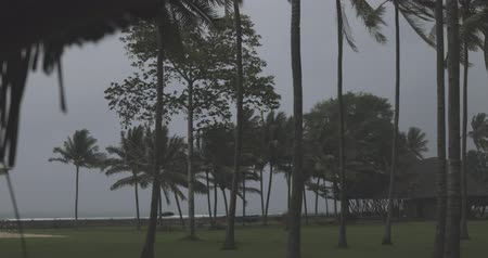 чаща : wind blowing before raining, green park full of palmes, hammocks and small house, tropical climate Стоковые видеозаписи