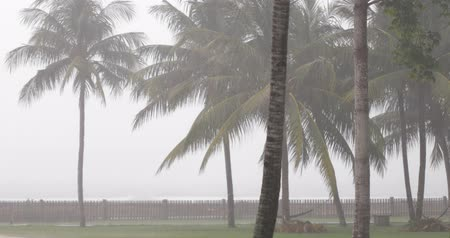 cabins : wind blowing before raining, green park full of palmes, hammocks and small house, tropical climate Stock Footage