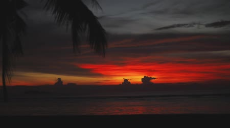 hawaje : Palm and awesome sunset, wonderful nature, sun reflection in water (ocean, sea) Wideo