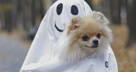 mysticism : Little girl in a costume ghost with orange pumpkin holding small dog . Halloween celebration holiday. Funny smiling grimace