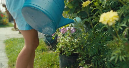 blumenbeet : Close-up of child girl with a blue plastic watering can waters flowers in summer garden, little helpers, outdoor activities on vacation. 4k video shooting by handheld gimbal Videos