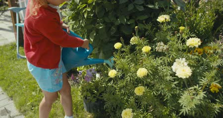 águas : Close-up of child girl with a blue plastic watering can waters flowers in summer garden, little helpers, outdoor activities on vacation. 4k video shooting by handheld gimbal Vídeos