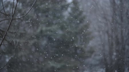 the window went first snow with large snowflakes Wideo