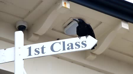 greatest : Rook takes off from a First Class SignPost.