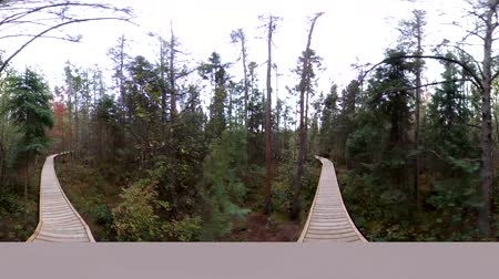 valóság : 4K 360 VR Walking Along Wooden Pathway In Forest and Bog Stock mozgókép