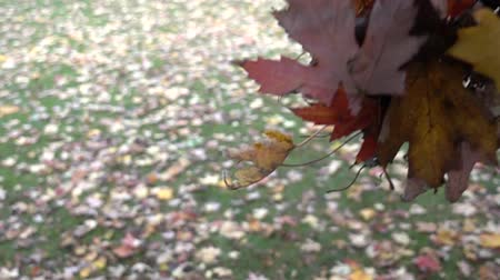 movimenti : Autumn Leaves Fall Super Super Slow Motion Filmati Stock