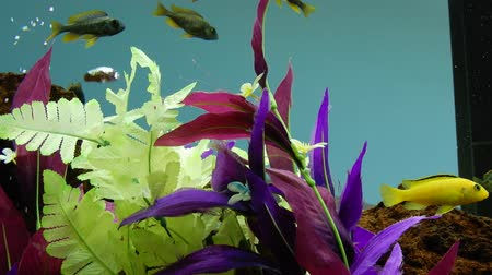 kapr : 4K Aquarium With Fish Swimming In Them