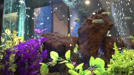 kapr : 4K Fish Aquarium With Bubbles And Wall Background