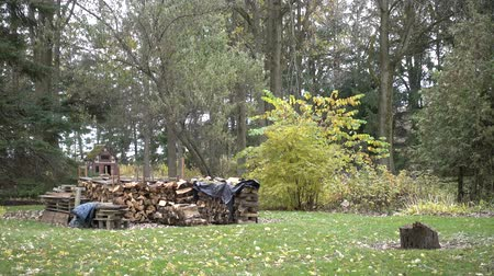esquerda : 4K Wooden Chopped Firewood In Blocks By Trees Stock Footage