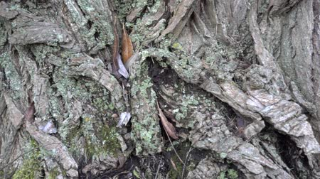 selektif : Slow Motion Panorama Of Tree Bark Close Up