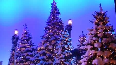 festividades : 4K Christmas Trees With Snow And Lights And Blue Sky