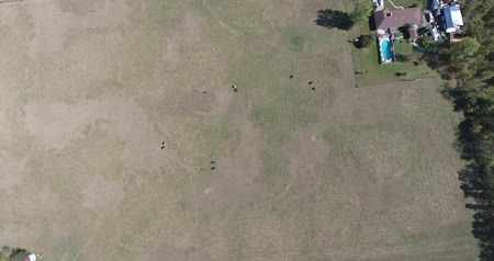 égua : Aerial View Of Horses Grazing In Field