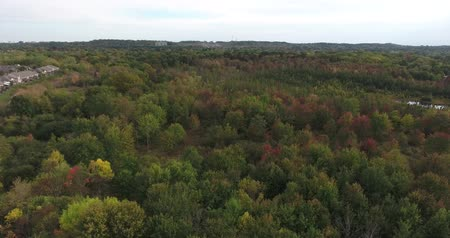 spitze : Herbstwald Low Level Flying Videos