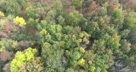 lombhullató : Flying Over Trees And Open Patch In Forest In Autumn