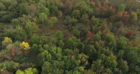 silvicultura : Forest Aerial Green And Red Leaves Tilt Down