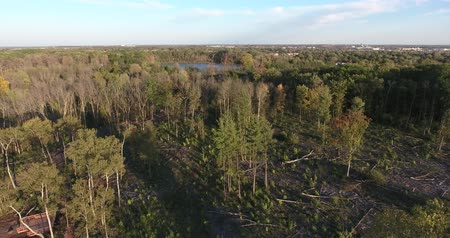 legyek : Forest Low Fly With Felled Trees And Logs With Lake In Distance Stock mozgókép