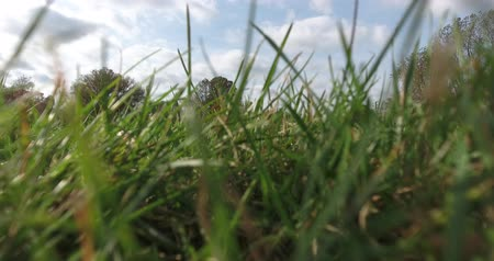 kapradina : Video Of Clouds Moving Through Green Grass Low Angle Shot 4K