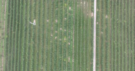apple tree : Apple Orchard Aerial With Pathway Flyover Stock Footage