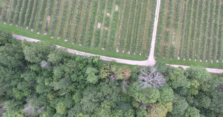 lombhullató : Flying Over Forest Tree Tops Towards Apple Orchard Aerial