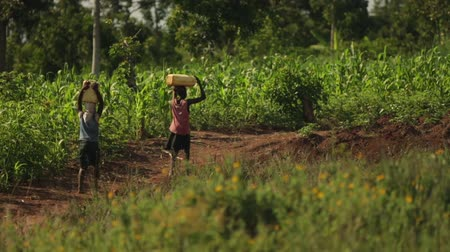 poça de água : Two African girls walking through a field carrying water on their heads