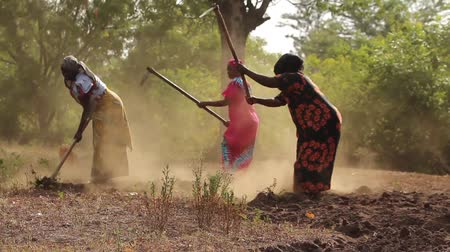 çiftçi : African ladies manually working the land Stok Video