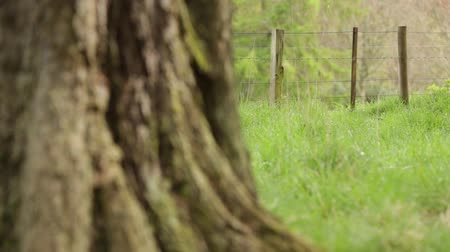 sáně : Slider shot of a fence in rural Perthshire, Scotland