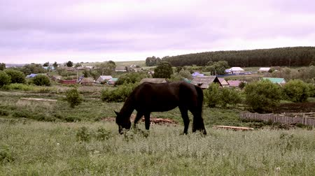 Single black horse eating from a pasture in a village