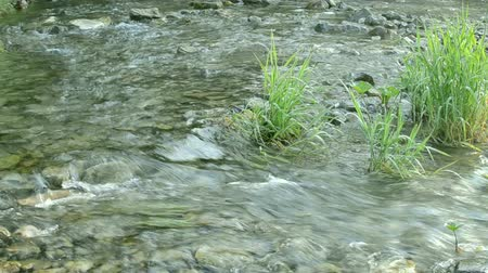 Gentle flowing river moves over stones and through vegetation