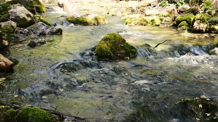 Gentle flowing ice cold river stream flows over moss covered stones and rocks