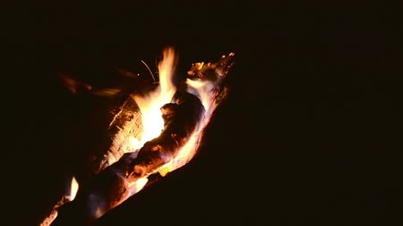 Log campfire burning gently at night with nobody Stock Footage