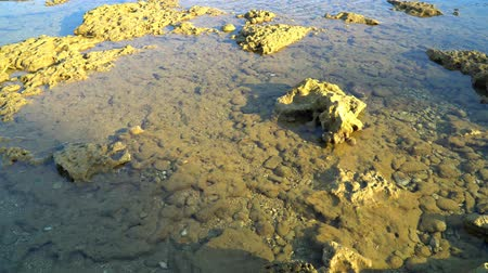 intertidal : marine life at shallow depths
