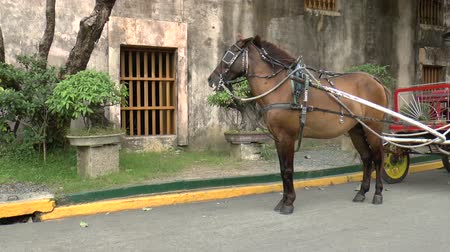 cavalo vapor : horse-drawn carriage at fort Santiago Manila. Vídeos