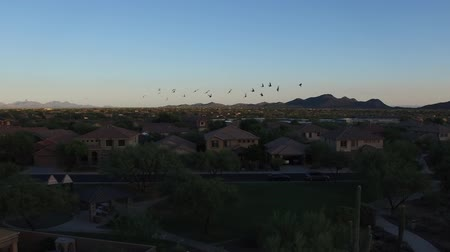 Arizona Park with Birds at Sunset