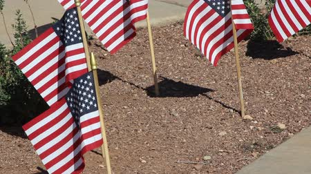 veterano : Small American Flags in ground waiving Stock Footage