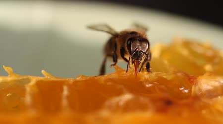 apiary : Bee gathering honey and nectar