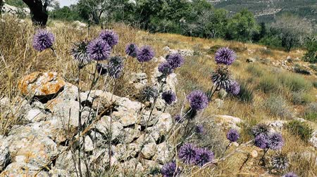 israele : Nature and landscape around Jerusalem in Israel