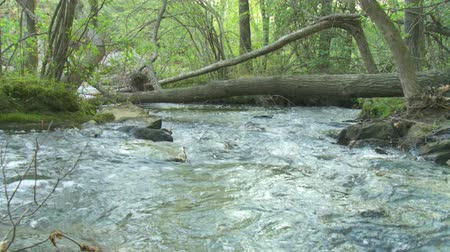 бросаясь : Seamless loop of a mountain creek near a fallen tree in early spring.