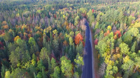 enrolamento : Forest road of New England foliage season, aerial view Vídeos