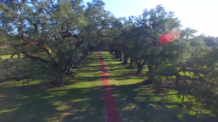 row : Aerial view of Oak Alley Plantation, Louisiana