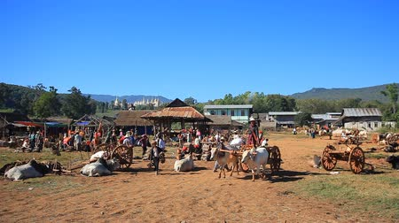 hill tribe : NYAUNG SHWE, MYANMAR - DEC 7 : Every 5th day all the hill tribes people around Inle lake using Ox carts come down from mountain to sell and buy their goods in Taung-to  five-day market Market  located by lakeside village South of Inle lake Nyaungshwe city