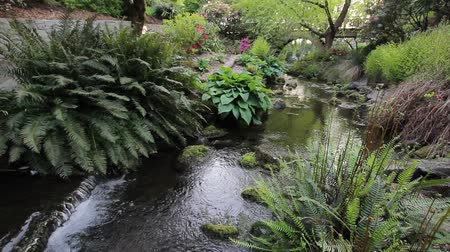 pomost : Ferns and Hostas Plants along a Water Flowing Creek in Crystal Springs Garden in Portland Oregon 1920x1080 Wideo