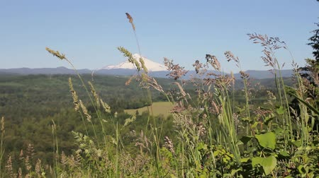maska : Mount Hood with Wild Grass and Flowers against Blue Sky in Sandy Oregon Spring Season