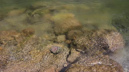 devletler : Lower Lewis River Closeup in Washington State 1080p Stok Video