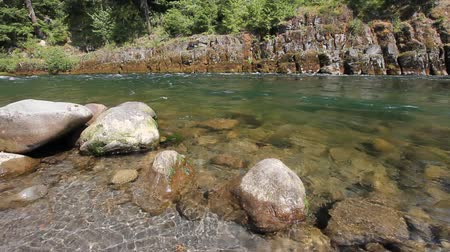 state park : Lower Lewis River Closeup in Washington State 1080p Stock Footage