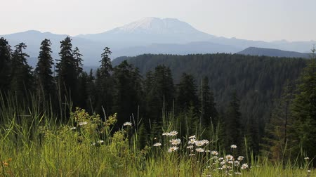 mt : Scenic View of Majestic Mount St. Helens in Skamania County from McClellan Viewpoint 1920x1080 Stock Footage
