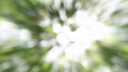 natura : Light Burst Ray Effect Moving Blurred Out of Focus Bokeh Green Sparkly Background Time Lapse 1920x1080