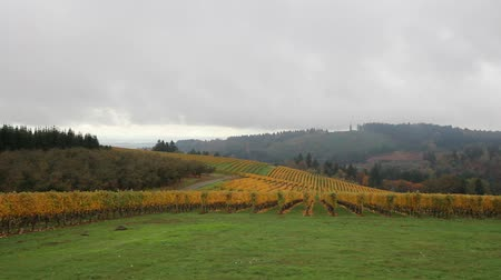 enevoado : Vineyard Plantation with Grapes Bearing Vines with Autumn Fall Colors on the Rolling Hills in Dundee Oregon Panning 1920x1080 Vídeos